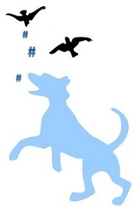 Dog chasing hashtags dropped by birds