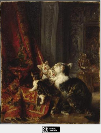 Interior with cats